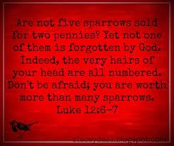 Luke 12 6-7